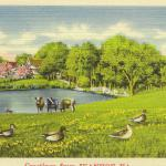 Geetings from Ivanhoe, pasture and pond drawing with cattle and ducks