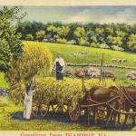 Farming in Ivanhoe, horse drawn hay wagon and farmer with helper